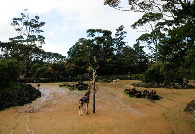 オークランド動物園 3