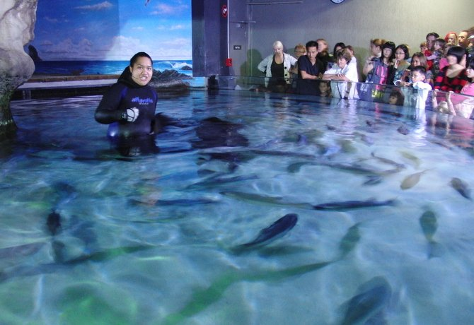 ケリータールトンズ水族館