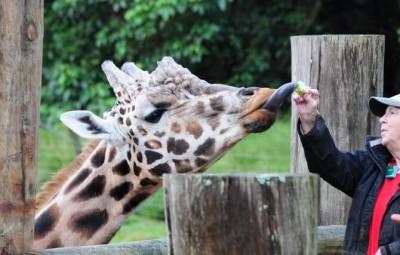 オークランド動物園(Auckland Zoo)